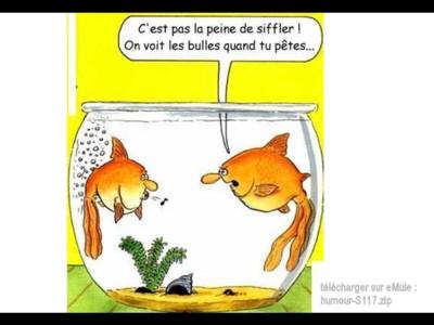 humour - images drôles 100226055139952275522379