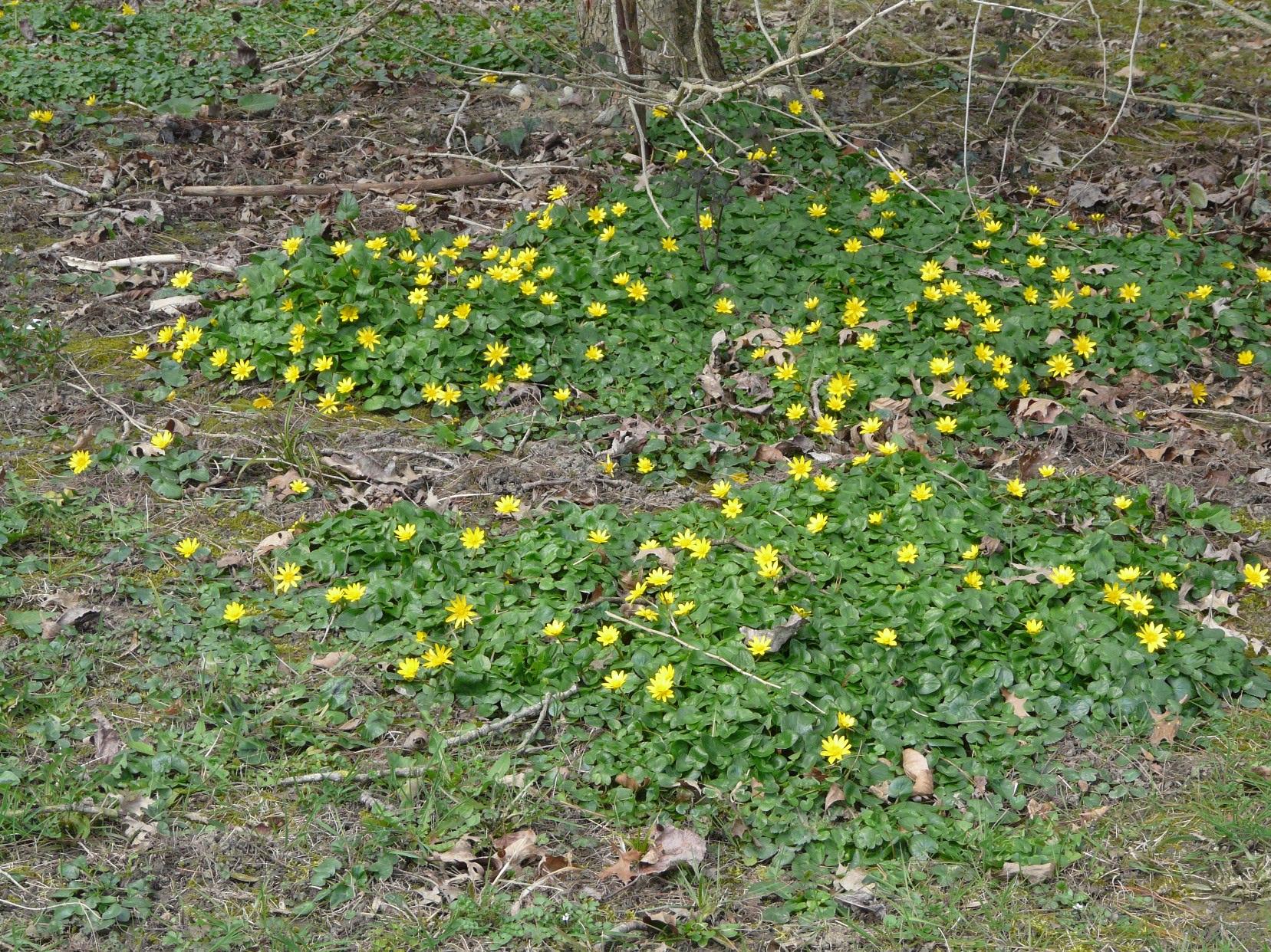 le printemps arrive 100302110705123975547491