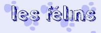 Sotw n°10 - Les félins 100407092614711425788452