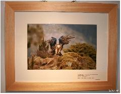 Album baie de somme 1- Image IMG_0879