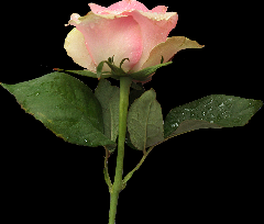 Album Tubes fleurs- Image Seachell_Angels and Faeries_Eleme