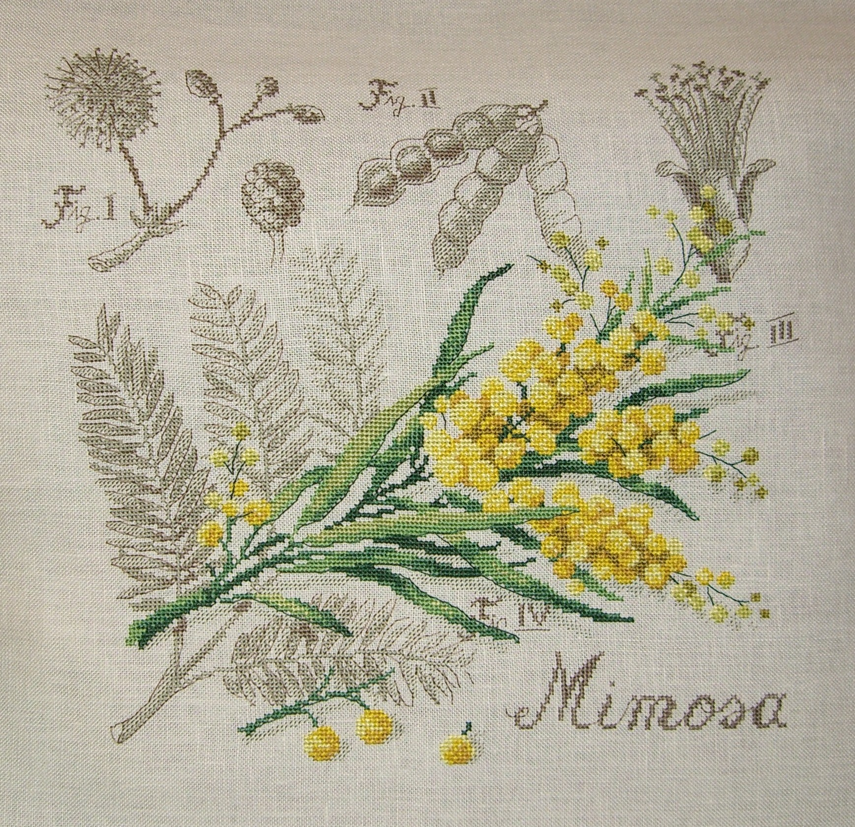 Planche Mimosa