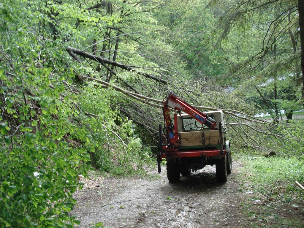 unimog mb-trac wf-trac pour utilisation forestière dans le monde - Page 5 10050709573045865985911