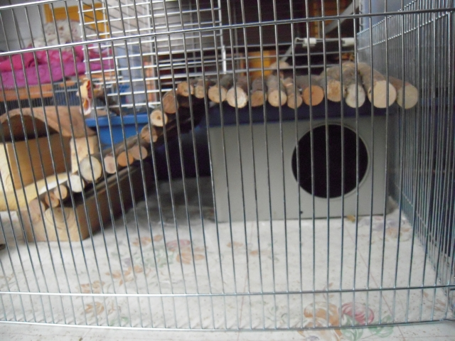 cage2
