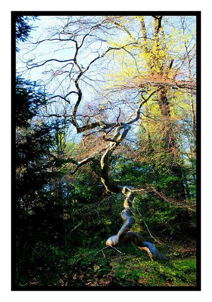 Faux : les arbres tortueux 100515065920265786037798