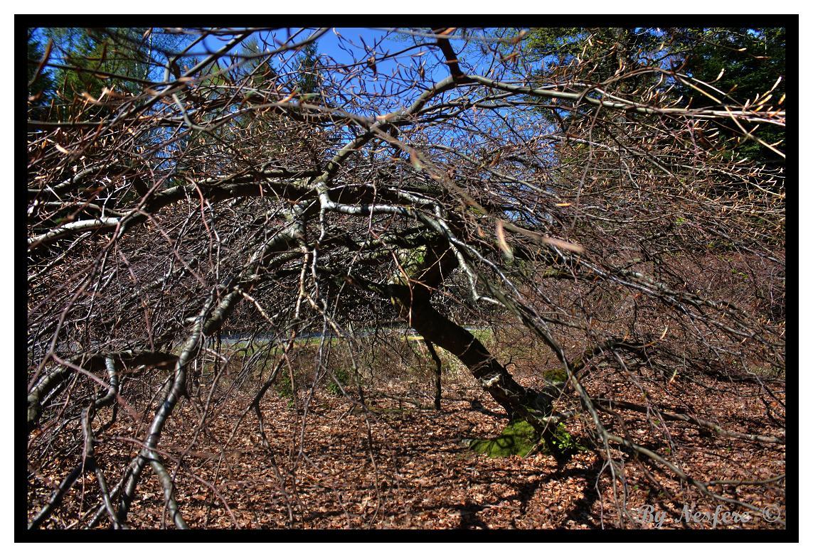 Faux : les arbres tortueux 100515090054265786038992