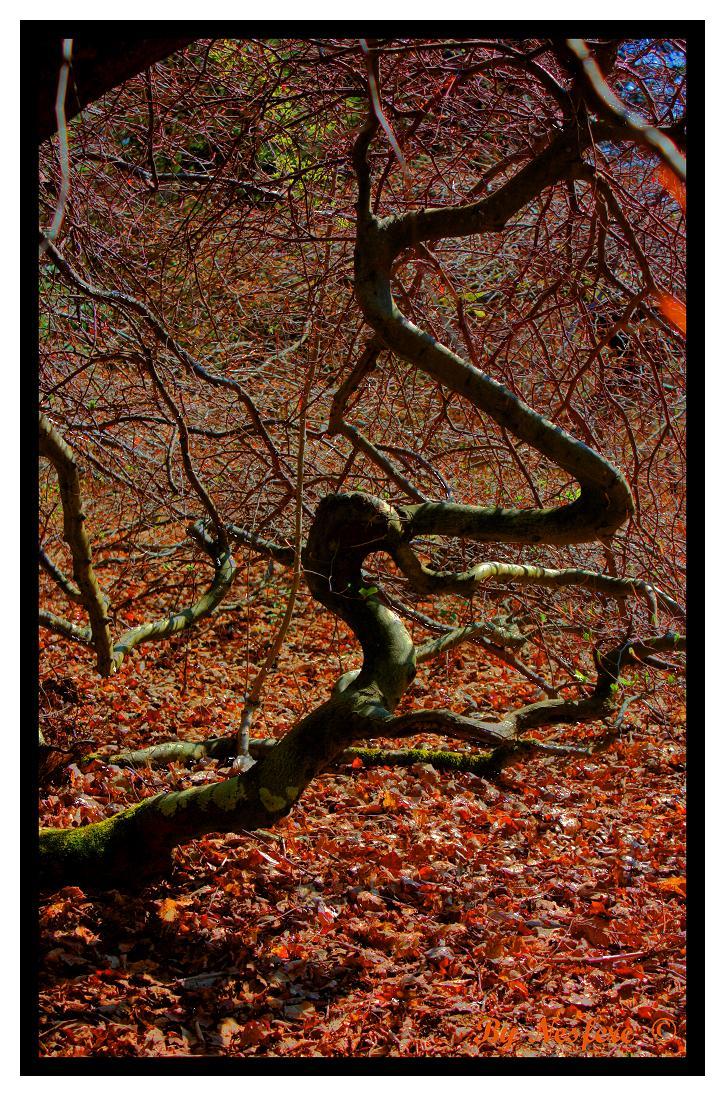 Faux : les arbres tortueux 100515090054265786038993