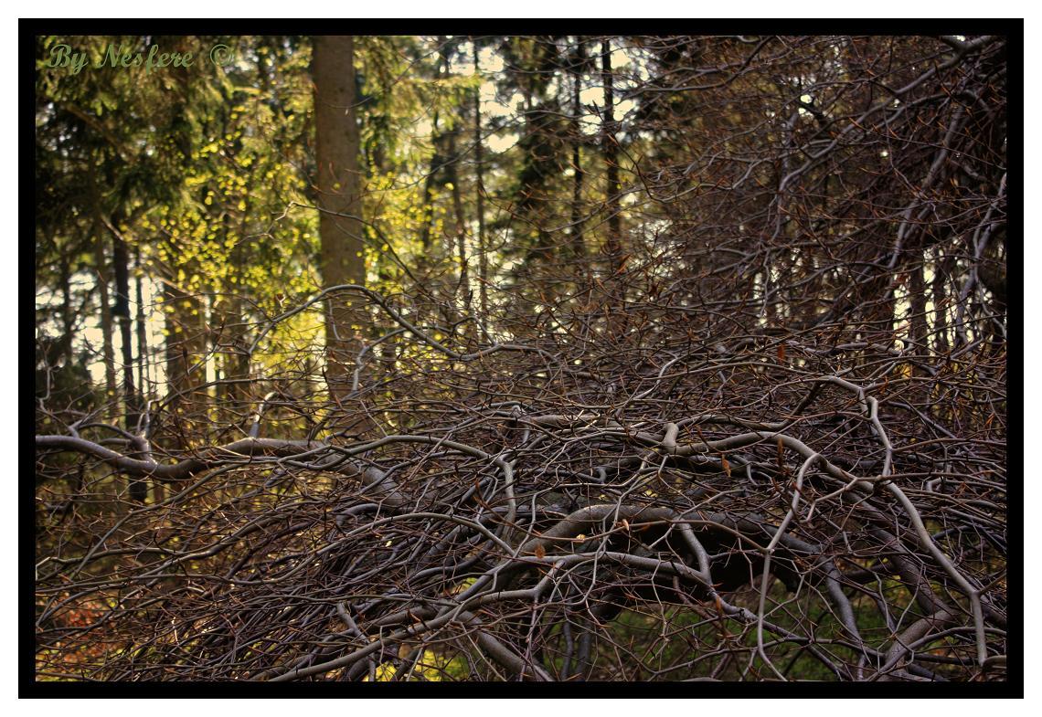 Faux : les arbres tortueux 100515090054265786038994