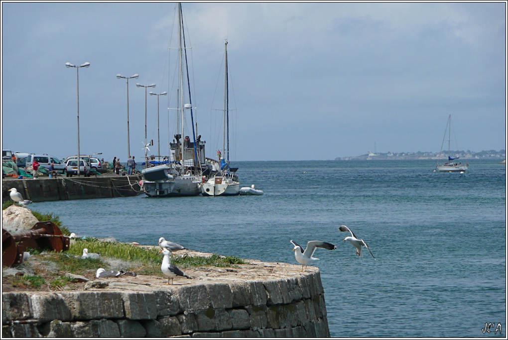 [Activité hors Marine des ports] LE CROISIC Port, Traict, Côte Sauvage... 100526065007743896106903