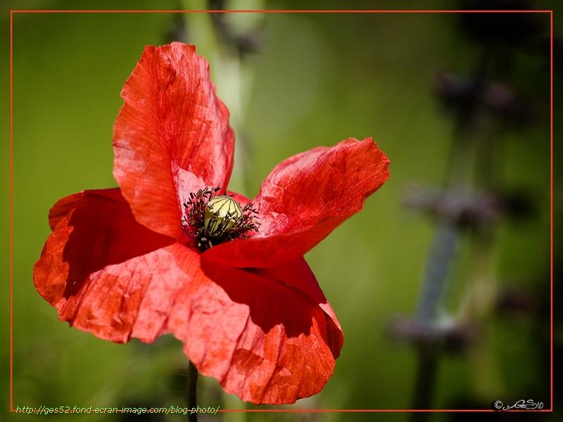 Papillon rare 100531113622255586142922