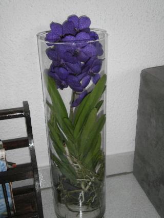 Conseils pour les Orchidées 100601054947187406146418.jpg
