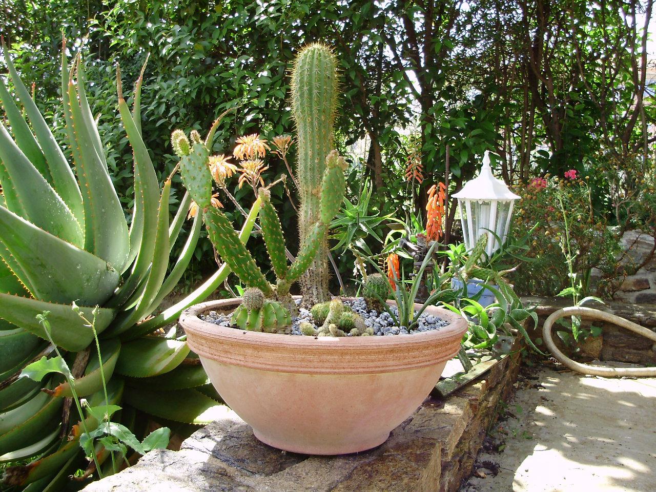 photo composition cactus de l 39 album cact es. Black Bedroom Furniture Sets. Home Design Ideas