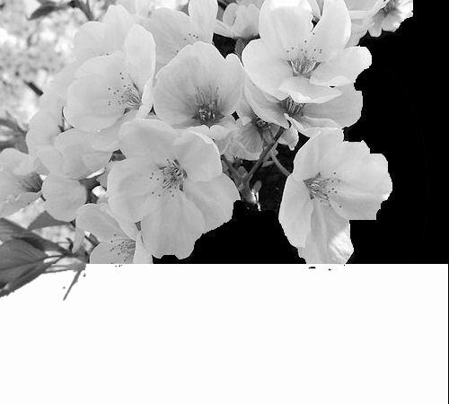 "Créations masque  "" théme cerisier"" - Page 2 1007040316111063506345292"