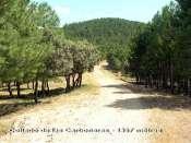 Collado de las Carboneras - ES-AB- 1357 m