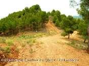 Collado del Camino de Olvés - ES-Z- 758 m